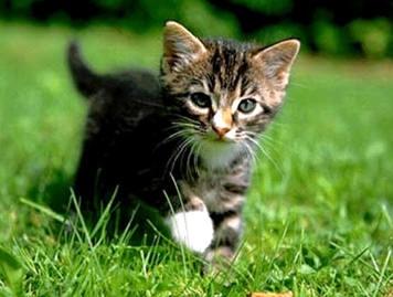 """""""Quem não tem cão, caça com gato"""". Vale levar o gatinho para o evento na Barra neste domingo e improvisar ala dos """"gatominhantes"""""""
